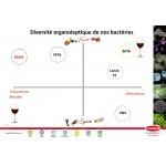 Lalvin VP41 250 g für 250 hl Starterkultur für den biologischen Säureabbau