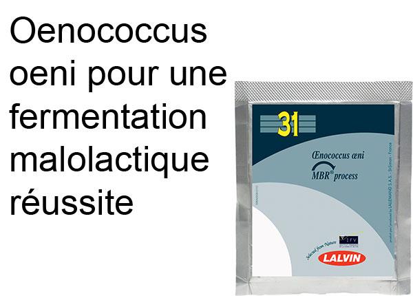 oenococcus oeni bactéries pour la fermentation malolactique