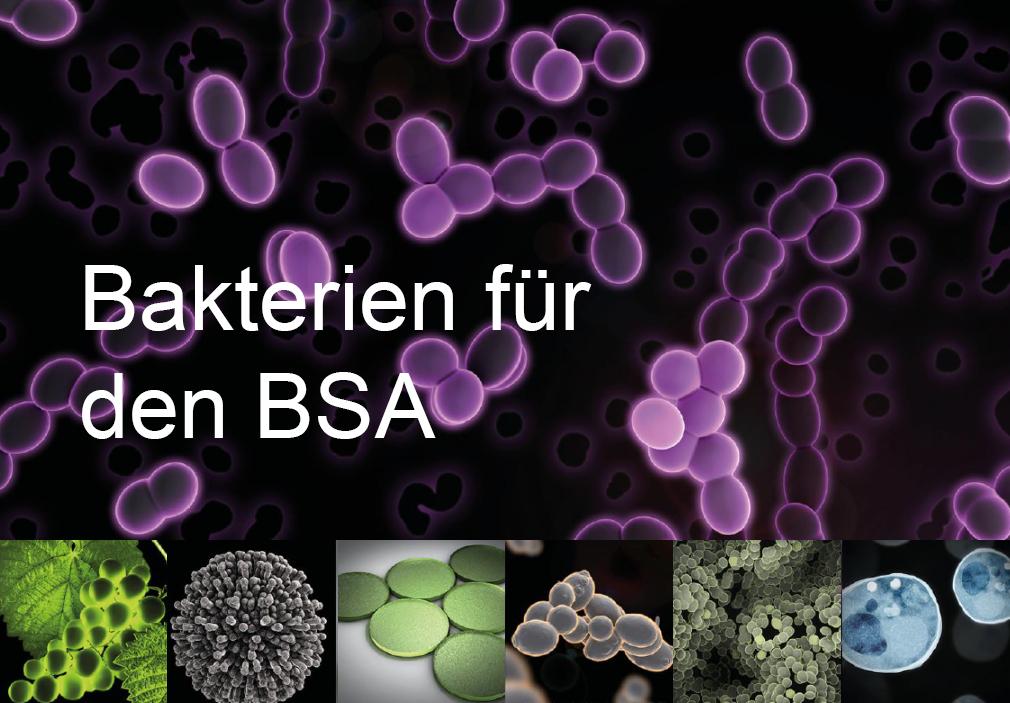 Weinbehandlungsmittel, oenococcus oeni, Bakterien Milchsäureabbau, Lallemand
