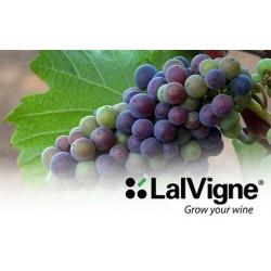 Pflanzenbehandlung Online Kaufen